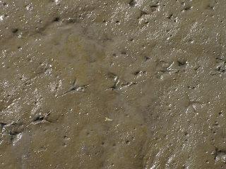 写真20060403c