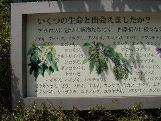 写真20060408g