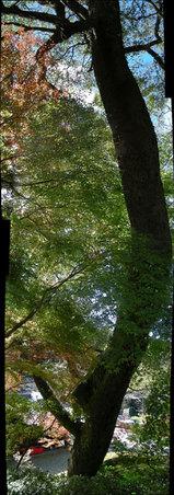 写真Pano_20071122_04