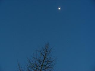 写真20070227a・銀杏の木の上