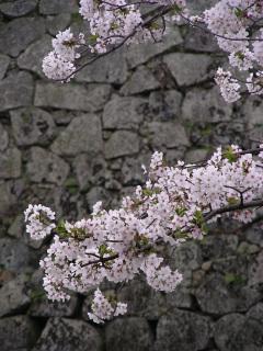 写真20070331b