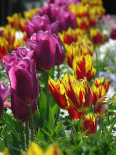 写真20070409b:花壇