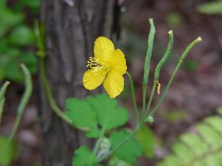 写真20070503c:花と実