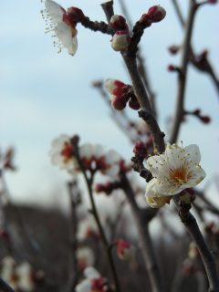 写真20080213a:白