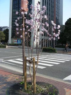 写真20080404k
