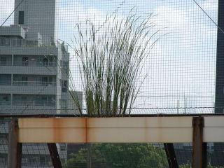 植物20080727d