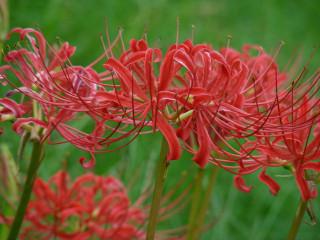 写真20081004b: 花
