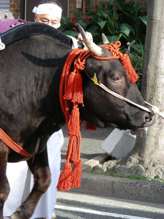 写真20081024a: 牛
