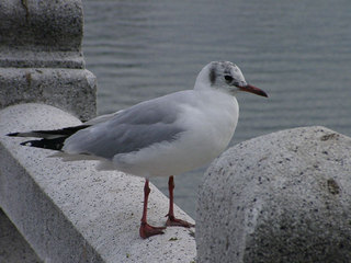 写真20060319c