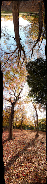 写真pano_20091202_11