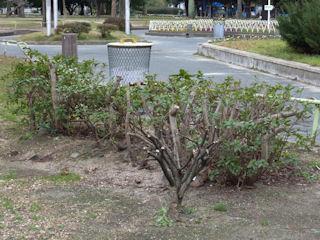 写真20100112g