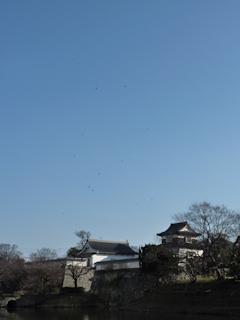 写真20100121c