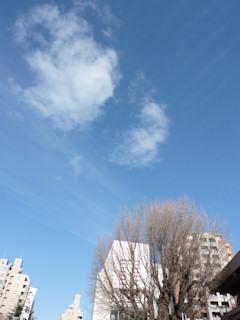 写真20100204a: 銀杏の木の上