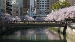 写真20110410p1270557b2: 天神橋から