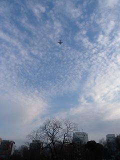 写真20120108p1730933b: 鱗雲の下を飛んでいく飛行機