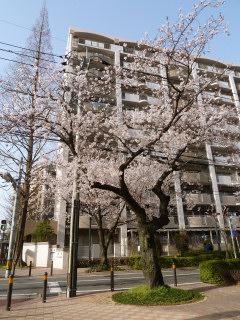 写真20120331p1080380b