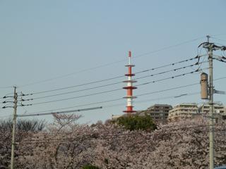 写真20120331p1080475